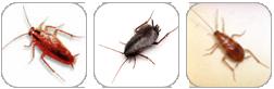 disinfestazione scarafaggi milano